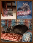 Karma_the_old_kitty_in_three_pictures_one_with_ribbon_two_on_her_favorite_pillows