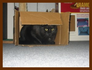 young_Theo_the_cat_hiding_in_a_box