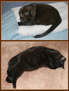 Theo_the_cat_sleeping_in_two positions_one_with_his_paws_over_his_eyes