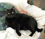 Black cat at Furkids shelter